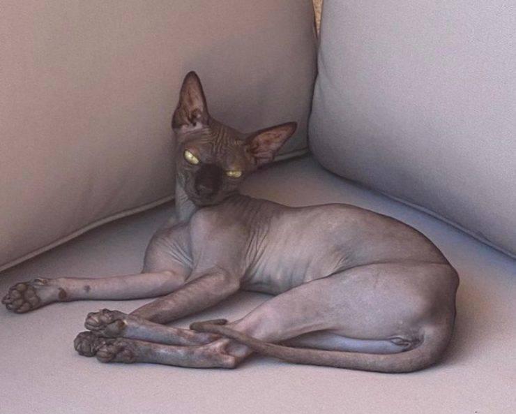 I gatti di Ilary Blasi: Donna Paola