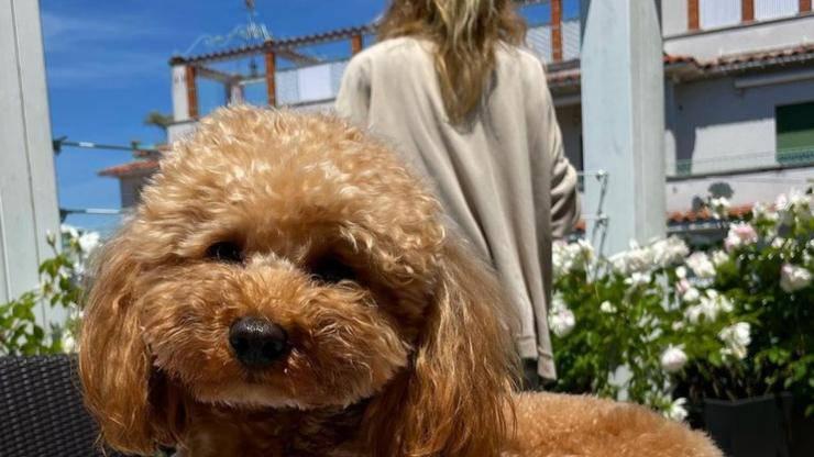 Il cane di Alessia Marcuzzi. Brownie