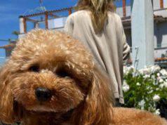 Il cane di Alessia Marcuzzi