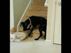 cane bambino salire scale
