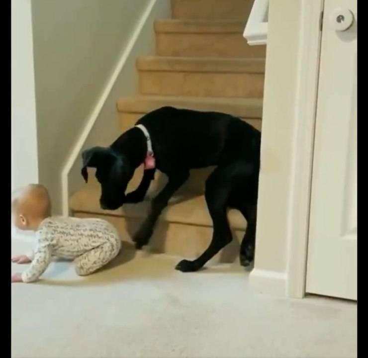 cane impedisce bambino scale