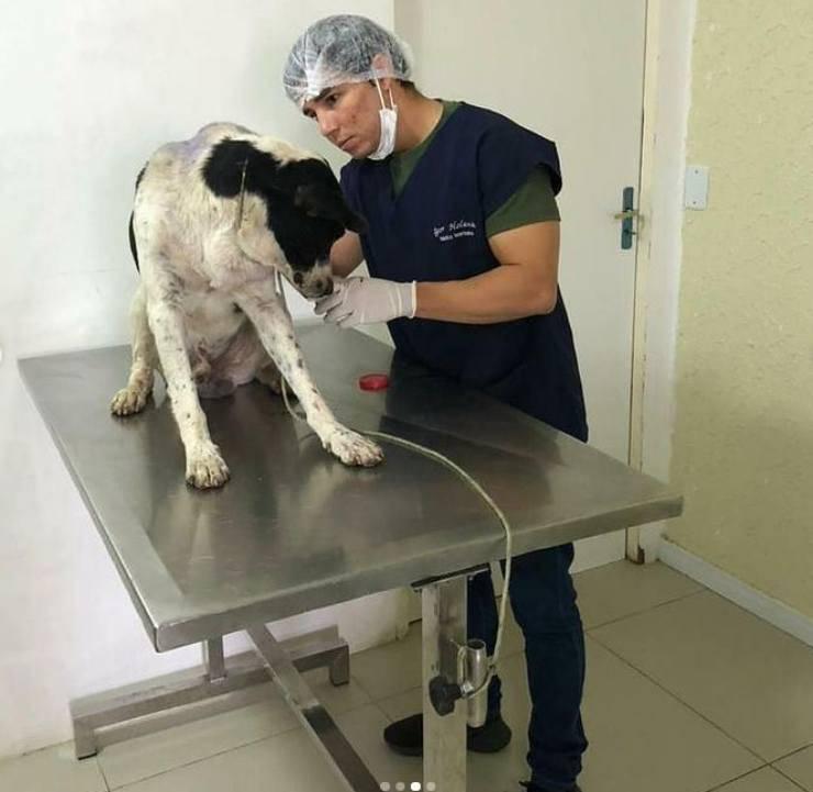 cane entra clinica veterinaria