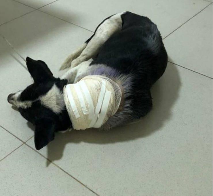 cane clinica veterinaria video