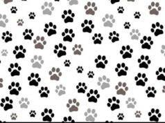 Il test visivo complesso sfida gli utenti a trovare all'interno dell'immagine che rappresenta moltissime impronte di gatto quella della lince