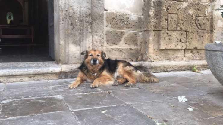 Cane davanti la Chiesa (Foto Facebook)
