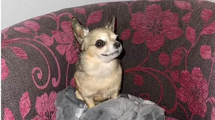Donna fa imbalsamare il cane per continuare a vederlo dopo la sua morte
