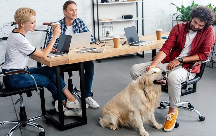 cane a lavoro