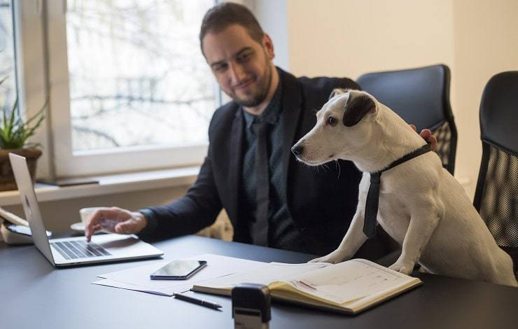 cane con cravatta