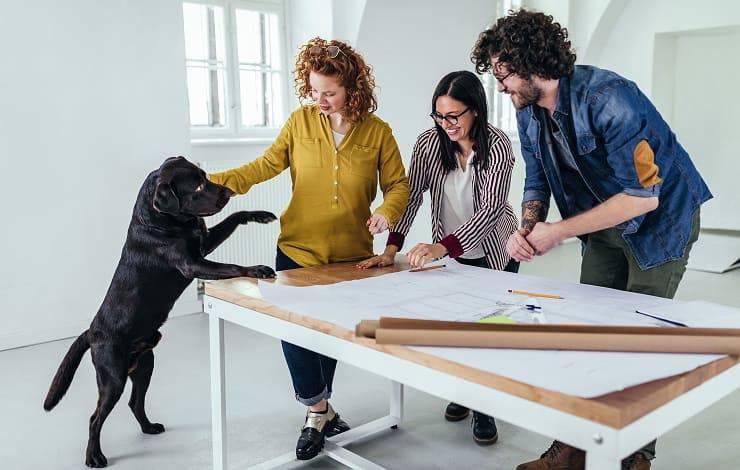 cane nero tra colleghi di lavoro