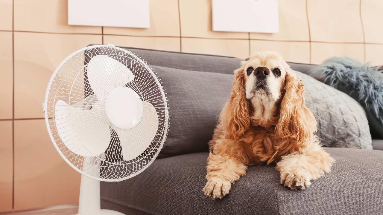 Perché il cane ha paura del ventilatore?