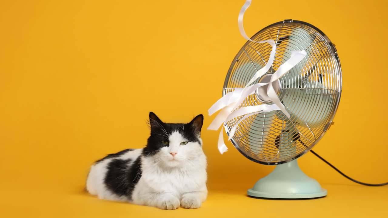 Perché il gatto ha paura del ventilatore?