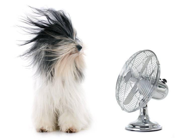 cane davanti ad un ventilatore