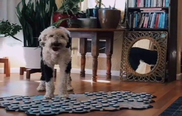 Bunny con la Pulsantiera (Screen video Tik Tok)