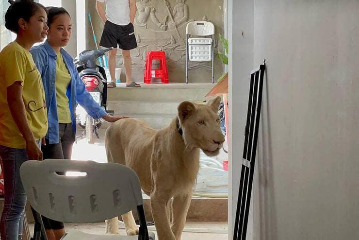Leone in casa (Foto Facebok)