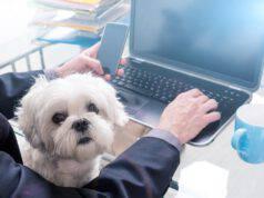 giornata mondiale dei cani in ufficio 2021