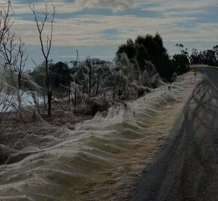 Fenomeno mongolfiera Australia (Foto Reddit)
