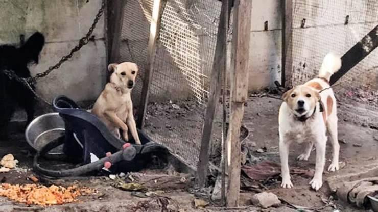 Cani Catena Sequestro Acerra
