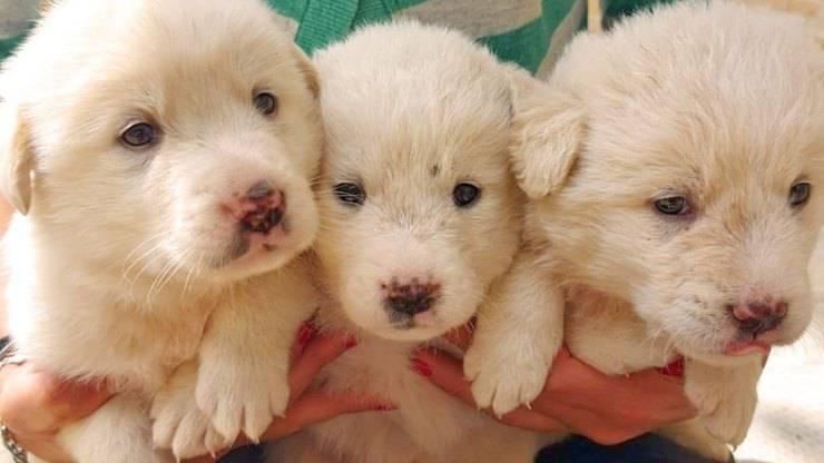 Tre Cani Abbandonati Santuario Cercano Casa