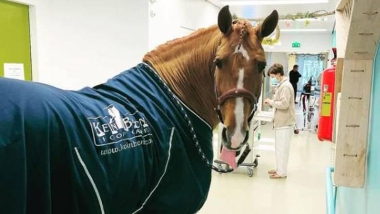 Cavallo Peyo Ospedale Pazienti