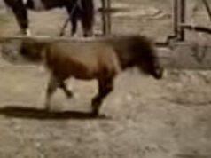 Pony Mela Gamba Rotta