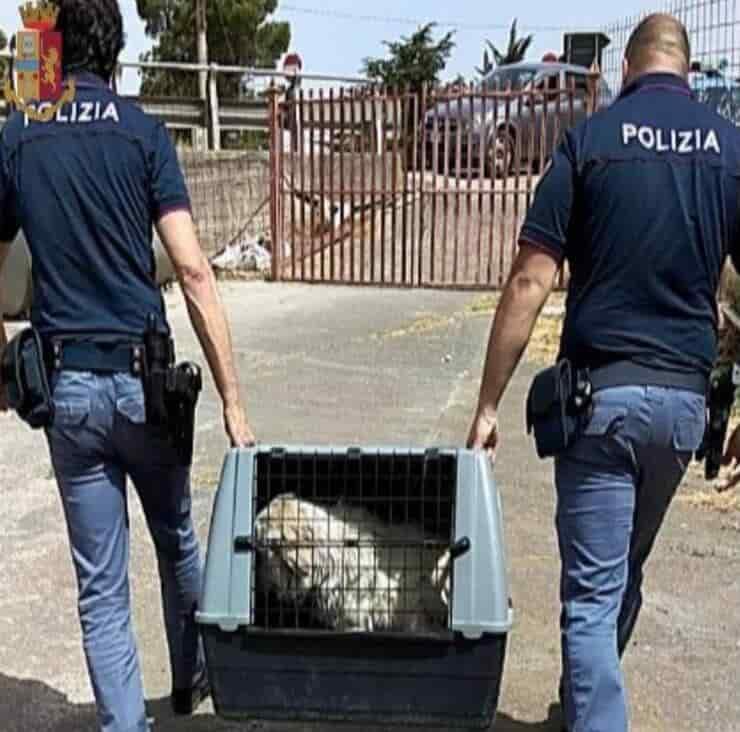 Polizia di Stato (Screen Facebook)