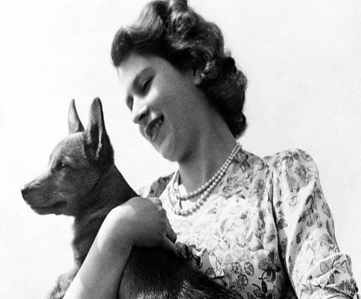 Regina Elisabetta con un suo corgi (Screen Instagram)