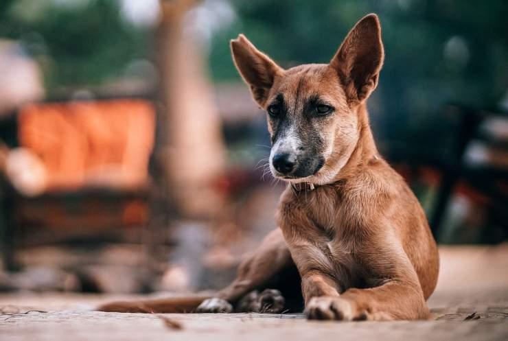 Cane triste in attesa (Foto Pixabay)
