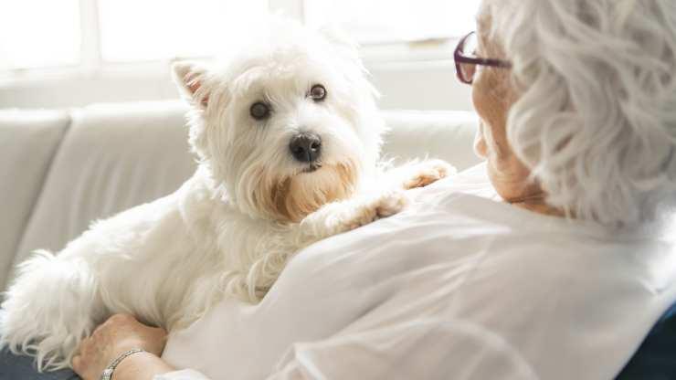 animali domestici per anziani
