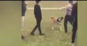 Donna condannata al carcere per insulti razziali e maltrattamento di animali (Screen video)