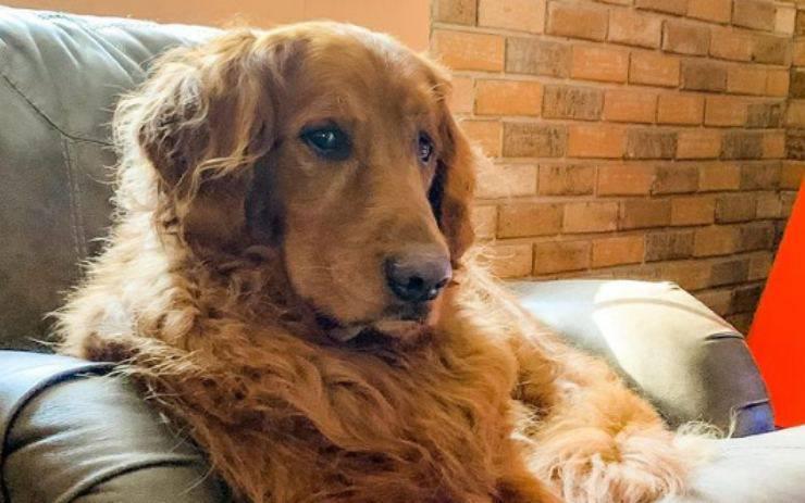Il cane triste (Foto Instagram)