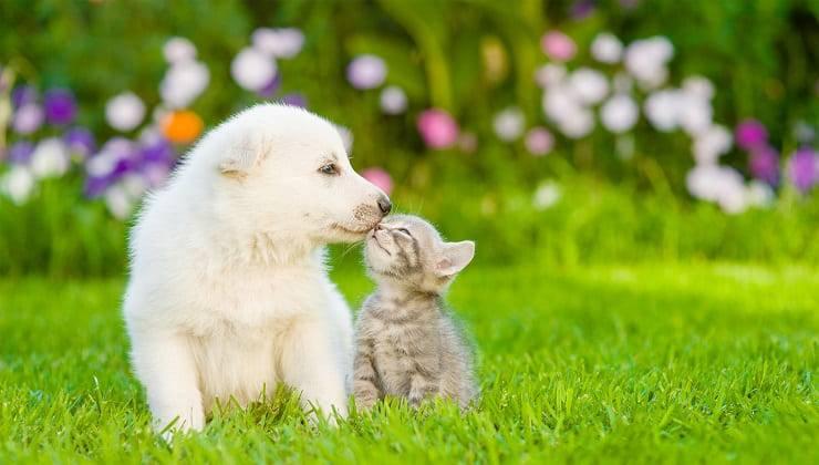 gatto e cane bacio