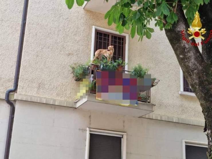 cane bilico ringhiera balcone