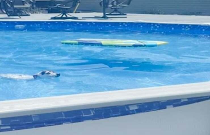 Cane in piscina (Screen Video)