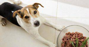 cane può mangiare rosmarino