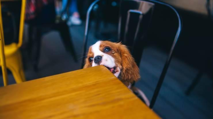 cane tavolo