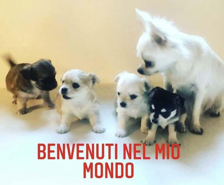 cani Cristiano Malgioglio (Foto Instagram)