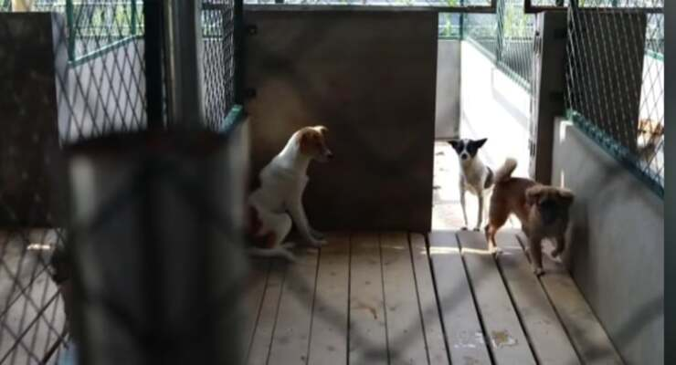 alcuni dei cani salvati grazie al monaco