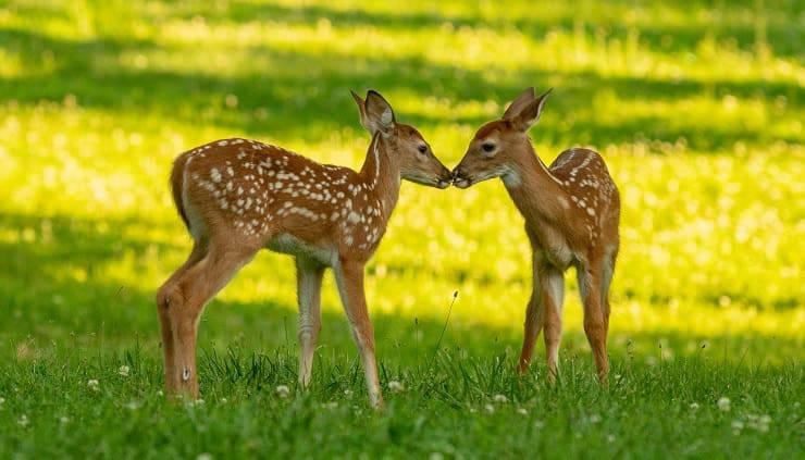 baci tra animali