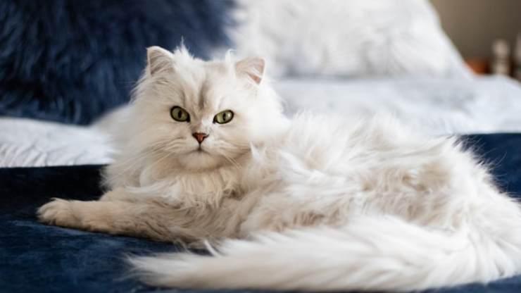 come capire umore gatto