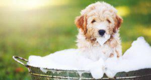 bagnetto al cucciolo