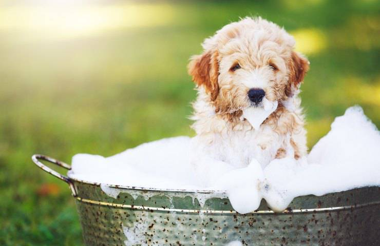 bagno al cane cucciolo