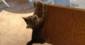 curiosità manx