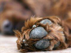 cuscinetti screpolati cane