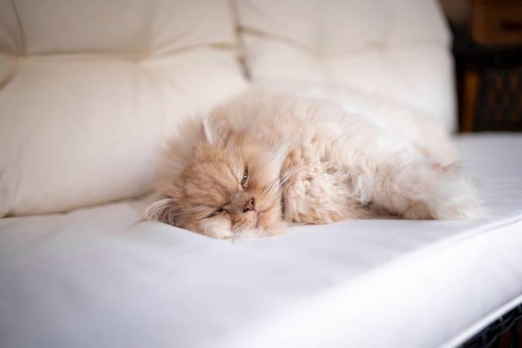 Il gatto e la patologia