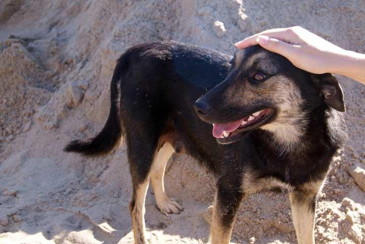 Carezze al cane, i benefici (Foto Pixabay)