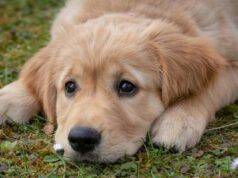 Cucciolo nell'erba (Foto Pixabay)