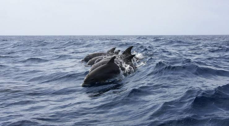 Delfini in mare (Foto Pixabay)
