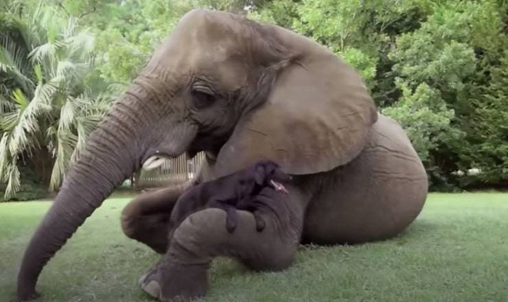 elefante bubbles e labrador bella