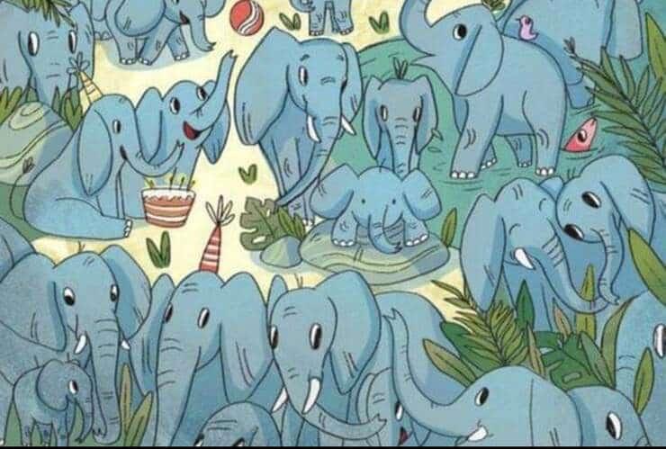 Il test visivo degli elefanti .Riuscite a trovare il piccolo orfano