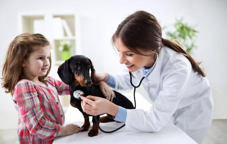 bassotto dal veterinario